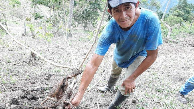 Campesino de Maripí entra al proyecto Proveedores Locales Sostenibles